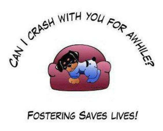 Foster picture
